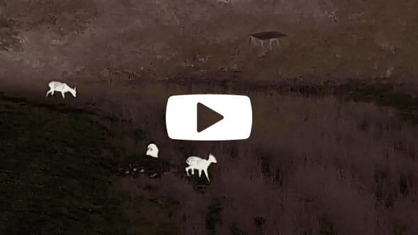 Liemke-Luchs-1_VideoTitelbild