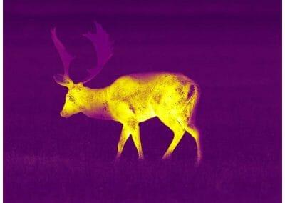 Aufnahme Pulsar Helion 2 XP50 PRO Violet